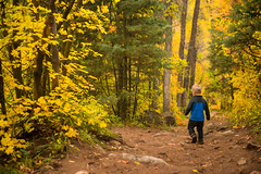 hiking in payson canyon (Sam Scholes) Tags: autumn trango colorful twoyearsold golden yellow paysoncanyon neboloop 2yearsold fall littleman