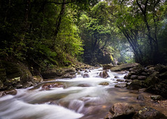 Jungle music (Chamikajperera) Tags: landscape sri lanka water stream river hirikatuoya long expo morning light canon 6d lee camping nature forest