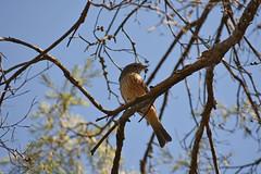 DSC_0725_edited-1.jpg (22Lavender22) Tags: elements nature d3400 nikon wildlife australia
