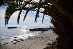 """ Beach daze always... (bo.d70) Tags: nature nikonphotography sun sea california lagunabeach landscapeview nikond610 beautifulday beach"