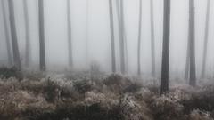 In the Fog II  /09 (KromOner) Tags: kromoner art design minimal dark nature forest trees woods silent solitude silence mood atmosphere quiet canon austria fog foggy mist misty lucid