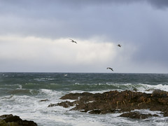 Stormy weather! (Elisafox22) Tags: elisafox22 sony rx100m3 hsos watermove smileonsaturday hcc clichesaturday sea waves winter spray rocks seagulls storm clouds sunless outdoors banff aberdeenshire scotland elisaliddell©2019