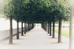 Avenue (Non-native New Yorker) Tags: trees newyork fdr rooseveltisland