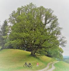 DSC05618 (ursrüegsegger) Tags: linden juli august getreideernte bauernhöfe landschaft regenbogen