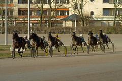 Berlin Trabrennbahn Mariendorf 27.1.2019 (rieblinga) Tags: berlin tempelhof mariendorf trabrennbahn sport renntag 2712019 3 rennen pferde
