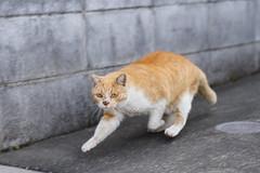 Cat (chocoogirl) Tags: 7riii 2470gm cat