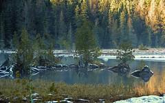 Iargo Springs - Winter 8 (jameskirchner15) Tags: iargosprings ioscocounty michigan huronnationalforest ausableriver water trees serenity winter snow nemichigan