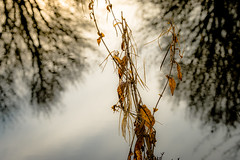 Touching the tree tops (tonguedevil) Tags: landscape outdoor outside view countryside winter nature trees reflections pond water plants leaves colour light sunlight shadows