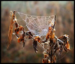 """""""Along Came A Spider...."""" (Phil Dodd CPAGB BPE2*) Tags: fujix naturescomposition sandwellvalley natural colourphotography fujifilmxpro1 xphotographer xseries xseriesphotography fujifilm westmidlands thegreatoutdoors naturalhistory xpro1 fujixf1855mmf284rlens dew spidersweb uknature naturereserve xshooter xphotography fujixpro1 spring outdoor outandabout colour"""