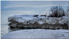 FEBRUARY 2019 NGM_0206_6816-1-223 (Nick and Karen Munroe) Tags: icy ice icecrystals icestorm wintry winter winterwonderland jackdarlingpark jackdarling mississauga lakeshore lakeshoreblvd lakefront waterscape seascapes karenick23 karenick karenandnickmunroe karenandnick munroe karenmunroe karen nickandkaren nickandkarenmunroe nick nickmunroe munroenick munroedesigns photography munroephotoghrpahy munroedesignsphotography nature landscape brampton bramptonontario ontario ontariocanada outdoors canada d750 nikond750 nikon nikon2470f28 2470 2470f28 nikon2470 nikonf28 f28 colour colours color colors