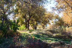Clear Creek Open Space (BeerAndLoathing) Tags: 2018 october denver 77d colorado outdoors clearcreek canon fall arvada usa canoneos77d