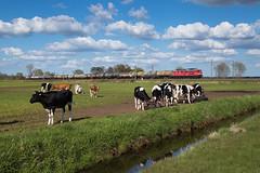 Osterhorn (Nils Wieske) Tags: schleswigholstein mittelholstein baureihe 232 leg bahn eisenbahn güterzug train railway railroad zug züge ludmilla