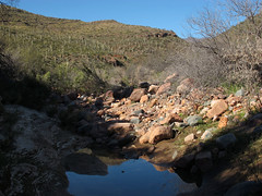 Canyon Bottom Reflections (zoniedude1) Tags: arizona desert mountains canyon creek reflection pool canyonbottomreflections springinthedesert landscape view saguaros sonorandesert desertscape saguarocactus carnegieagigantea azdesert wildoutback sierraancha gilacounty tontonationalforest tontobasin desertspring2019 2720ftelevation inthewild armergulchexpedition2019 outdoors hiking exploration discovery southwest nature canonpowershotg12 pspx19 zoniedude1 earthnaturelife