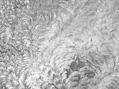 Frost swirls on a window (Walt Polley) Tags: copyright©2018waltpolley kansas farm iphone7s