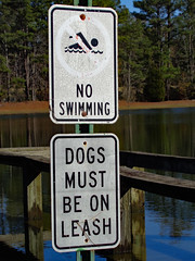 No Swimming/Dogs Must Be On A Leash Signs. (dccradio) Tags: lumberton nc northcarolina robesoncounty outdoor outdoors outside nature natural scenic lutherbrittpark park citypark december weekend saturday morning goodmorning winter saturdaymorning sony cybershot dscw830 flood flooding water bodyofwater pond lake