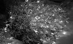 6Q3A9115 (www.ilkkajukarainen.fi) Tags: espoo talvi winter lumi snow blackandwhite mustavalkoinen monochrome light valo suomi finland finlande eu europa scandinavia