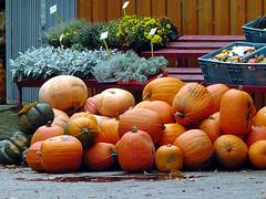 Pumpkin (robárt shake) Tags: squash gourd pumpkin kürbis nature nahrung food markt essen lebensmittel ökologie ökologisch plants pflanzen sale offer verkauf marktplatz natürlich