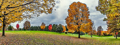 8R9A5440-43Ptzl1TBbLGERk (ultravivid imaging) Tags: ultravividimaging ultra vivid imaging ultravivid colorful canon canon5dm3 clouds stormclouds scenic trees tree autumn autumncolors rainyday pennsylvania pa panoramic painterly vista park landscape evening twilight lateafternoon leaves