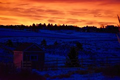 O, Glorious Daybreak:  Winter Sunrise (Ginger H Robinson) Tags: glorious daybreak dawn predawn winter january horizon tree house shed light snow fence rockymountain frontrange colorado denver orange sky cloud sunrise