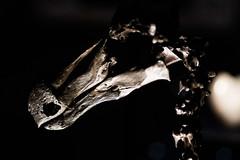 Dodo Skeleton - Natural History Museum London (nickstone333) Tags: naturalhistorymuseum london museum dodo skeleton skull extinct atxm100afprod tokinaaf100mmf28macro nikon nikond7100 d7100