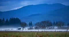 The Fog Cometh (autumnhillswoollens685) Tags: fog fogscapes eveningfog boistfortvalley westernwashingtonstate pacificnorthwest winterfog d800fx nikon300mmafsf4lens landscapes