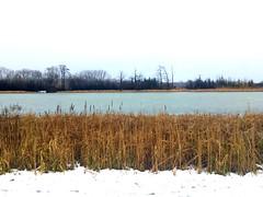 Zimowy Wilanów (basiamarcisz) Tags: snow ice water lake woda jezioro winter zima wilanów warsaw warszawa
