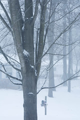 2019 Snow Trees-52 (Michael L Coyer) Tags: snow snowstorm forest woods tree haze winter