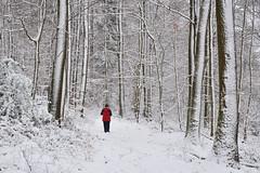Promenons-nous dans les bois (Excalibur67) Tags: nikon d750 sigma globalvision art 24105f4dgoshsma forest foréts arbres trees nature neige snow hiver winter