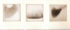 land 1 (ingrid_b21) Tags: chemigram blackandwhite alternative alternativephotography analogue analog