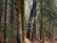 Morning Shine at Smokemont, Great Smoky Mountains National Park, North Carolina (netbros) Tags: greatsmokymountainsnationalpark northcarolina smokemont bradleyforktrail morningshine netbros internetbrothers