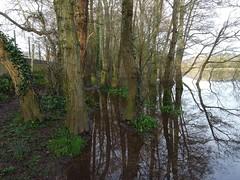 Flooded under foot (Phil Gayton) Tags: water tree sky high tide flood riverside walk river dart totnes devon uk