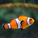 Animal clown fish - Credit to https://homegets.com/