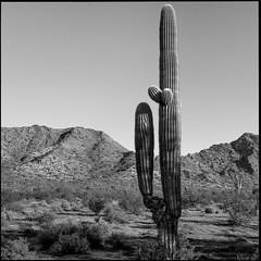 The Gap (greenschist) Tags: usa sonorandesert cactus cacti mountains blackwhite arizona saguaro pinalcounty carnegieagigantea santanmountainregionalpark