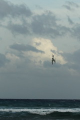 F913 Diving Tern EF100-400/4.5-5.6 7DMkII Mexico H89A8056 R (Hiro sensei photos) Tags: ef100400mmf4556 7dmkii birds