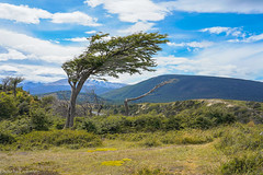 The expanse оf Tierra del Fuego... / Огнеземельские дали... (Vladimir Zhdanov) Tags: travel argentina tierradelfuego tree mountainside grass field forest sky cloud nature landscape