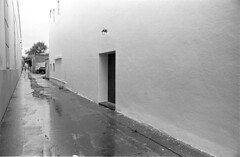 scan.film.rain.wall (ThroopD) Tags: f2 filmchemistry filmscan freshcleand76 nonfoto nkj28cm nonarchitectural nonwall nondoor nonalley