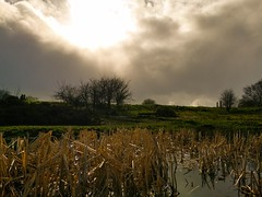 Sun, Clouds, Rain (ianclarke82) Tags: moody clouds rain sunny sunshine contrast elements pond nature walking exploring mobilephotography greatermanchester greatbritain sky huaweip20
