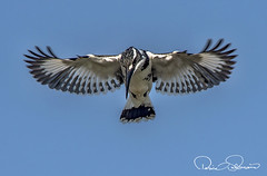TAR_4530s (TARIQ HAMEED SULEMANI) Tags: sulemani tariq tourism trekking tariqhameedsulemani winter wildlife wild birds nature nikon