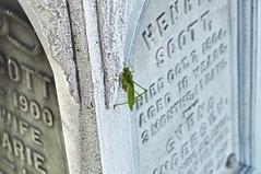 Park Cemetery, Bridgeport, CT (caboose_rodeo) Tags: 137 bridgeportct critter insect zinc monumentalbronzecoset
