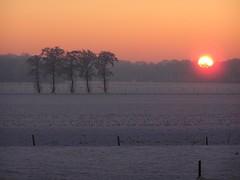 Winter..... (bobbykwibus) Tags: sneeuw2 winter tree boom sneeuw zon sun sky landscape