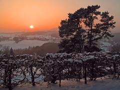 Winter sunset (echumachenco) Tags: winter snow sunset sky sun evening red orange tree bush plant forest field hill foothill linz freinberg leonding upperaustria oberösterreich austria österreich outdoor landscape serene dusk mist wood