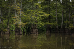Cypress Swamp (*Ranger*) Tags: nikond3300 nature water swamp forest trees cypress reflection tennessee usa