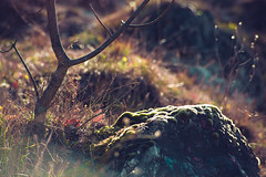 KRIS7975 (Chris.Heart) Tags: erdő buda budapest túra természet forest nature hiking