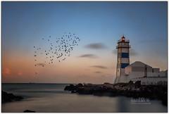 Faro de Santa Marta (Miguel Cádiz) Tags: portogallo ポルトガル語 alburtughal portugália portugalsko پورګال португалия 포르투갈 lighthouse منارة البرتغال cascais portugal sol atardecer puestadesol ocaso