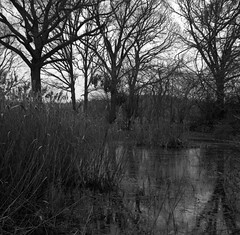 Winter pond (Rosenthal Photography) Tags: ff120 asa400 analog epsonv800 landschaft mittelformat mediumformat 20190301 rodinal12521°c105min 6x6 ilfordrapidfixer anderlingen städte zeissikonnettar51816 rolleiretro400s dörfer siedlungen winterpond winter pond mood february landscape trees water lake zeiss ikon nettar novar anastigmat 75mm f45 rollei retro retro400s rodinal 125 epson v800
