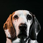 The new website is up! Go to ronaldmraz.com for more, and for contact info. #photography #michiganphotographer #dog #portraitphotography thumbnail