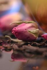 Chinese Rose (haberlea) Tags: home athome macro tea brew macromonday rose drink cup bud flower
