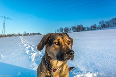 My Love (Andi Fritzsch) Tags: hera dogs dog doglovers dogphotography animal animallovers animalphotography winterwonderland winterphotography winter snow ice cold hund hunde nature naturephotography landscape landscapephotography