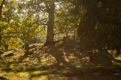 Gathering (Yvonne L Sweden) Tags: autumn mariefred nature forest sweden sunlight gathering fall deer light