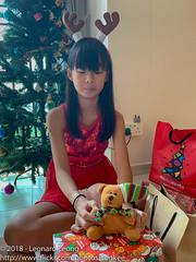 Brown Bear is back (Stinkee Beek) Tags: erin christmas